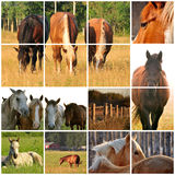 Horse collage. Collage of various horse images Stock Photo