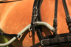 Horse collar - closeup. Stock Images