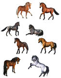 Horse collection Stock Photography
