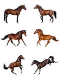 Horse collection Royalty Free Stock Photo