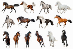 Horse collection isolated. On white background stock image