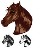 Horse color Royalty Free Stock Photo