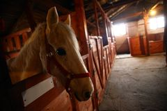 Horse. Color shot of a horse in a stable Stock Photo