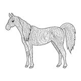 Horse coloring book for adults vector Stock Images