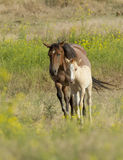 Horse and colt moment. Royalty Free Stock Photo