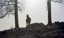Horse coming down a snowy hill Royalty Free Stock Photos