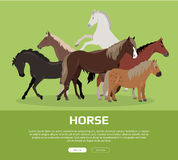 Horse Conceptual Flat Style Vector Web Banner. Horse conceptual web banner. Flat style vector. Group of different horses breeds, variety colors and sizes Stock Photo