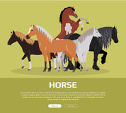 Horse Conceptual Flat Style Vector Web Banner. Horse conceptual web banner. Flat style vector. Group of different horses breeds, variety colors and sizes Stock Images