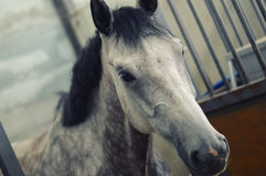 Horse concour Stock Image