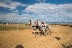 Horse contest with carriage on sunny day at the end line. Horse contest , horses and carriage on sunny day. This is a regional contest in Covasna County Stock Photo