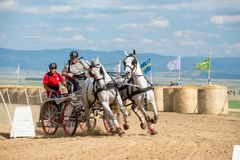 Horse contest with carriage on sunny day front view. Horse contest , horses and carriage on sunny day. This is a regional contest in Covasna County Royalty Free Stock Image