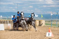 White horses and carriage on starting line at horse track. Horse contest with carriage on sunny day. This is a regional contest in Covasna County, starting line Royalty Free Stock Images