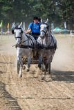 White horses and carriage on starting line at horse track. Horse contest with carriage on sunny day. This is a regional contest in Covasna County, starting line Stock Photo