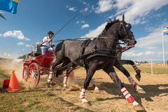 Black horses and carriage on starting line at horse track. Horse contest with carriage on sunny daynThis is a regional contest in Covasna County, starting line Royalty Free Stock Photography