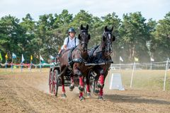 Horse contest with horses and carriage on starting line. Horse contest with 4 horses and carriage on sunny day Stock Image