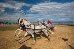 Horse contest with carriage on sunny day, close up shoot. Horse contest , horses and carriage on sunny day. This is a regional contest in Covasna County Stock Photography