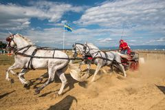 Horse contest with carriage on sunny day. Horse contest , horses and carriage on sunny day. This is a regional contest in Covasna County Royalty Free Stock Photo