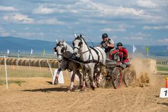 Horse contest with carriage on sunny day. Horse contest , horses and carriage on sunny day. This is a regional contest in Covasna County Stock Photos