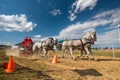 Horse contest with 4 horses and carriage on sunny day.  Royalty Free Stock Photography