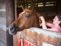 Horse Cornish Fair. A horse getting its hair braided at the 62nd Cornish Fair in Cornish, New Hampshire royalty free stock image