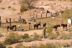 Horse corral. Horses in a desert corral await arriving riders Stock Images