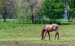 Horse, horse in corral. Horse in a corral close-up. Countryside landscape - image stock photography