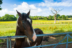 Horse in a corral Stock Image