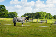 Horse in corral Royalty Free Stock Photo