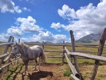 Horse in the corral. Mountain horse in the corral Stock Photo