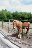A horse in the corral Royalty Free Stock Photo