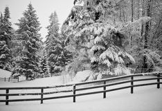 Horse Corral in Winter. Snowy country scene with pine trees and a wood rail fence Stock Photography