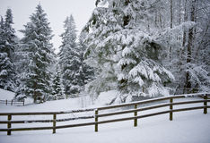 Horse Corral in Winter Snow. Rural, winter landscape with snow-covered trees in a fenced corral Stock Image
