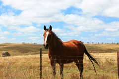 Horse in country landscape Stock Image
