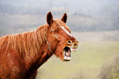 Horse in countryside Royalty Free Stock Photo