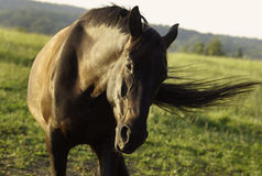 Horse in countryside stock images