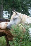 Horse in countryside. Group of horse behind plants in countryside Royalty Free Stock Photography