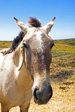 Horse in the countryside Stock Photo