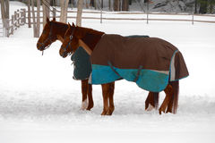 Horse Couple in Winter Royalty Free Stock Photo