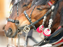 Horse Courtship Stock Images