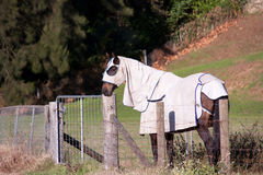 Horse covered in blanket and hood. A farm horse standing at a fence covered in full blanket and face hood Royalty Free Stock Photography