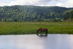 Horse and cow graze in a meadow near the village Stock Photo