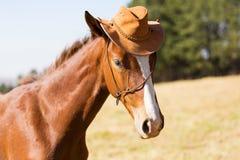 Horse cowboy hat Stock Image