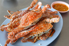 Horse Crab boil for eat royalty free stock photography