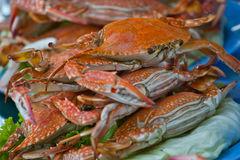 Horse Crab boil for eat. At chonburi thailand stock photos