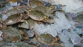 Horse crab. Fresh horse crab in market Stock Photo