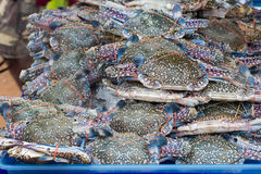 Horse crab. Fresh seafood from the sea Royalty Free Stock Photos