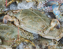 Horse crab in ice. For sale on market crust Royalty Free Stock Images
