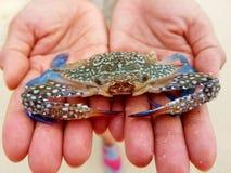 Horse Crab at Koh Larn. Stock Photos