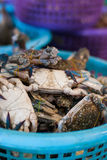 Horse crab in market Stock Photography