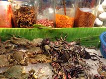 Horse crab and pickle crab shellfish Stock Image